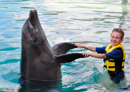 Терапия дельфинами при аутизме